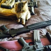 kitten shotgun ar15