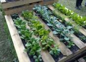 pallet-garden-ideas-8