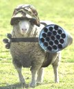 Sheep with Rockets