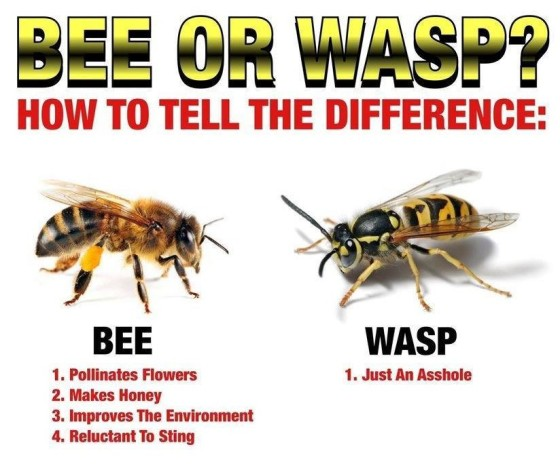 Bee vs. Wasp