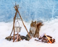 9-things-the-squirrels-are-up-to-these-days-5