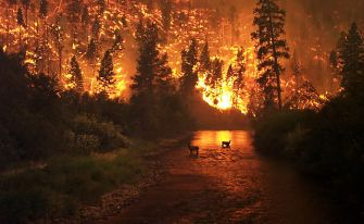 Wildfire_ElkBath