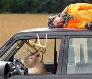 funny-deer-1