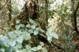 Camoflage Ghillie Suit