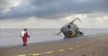 Radioactive fish tybee island bomb
